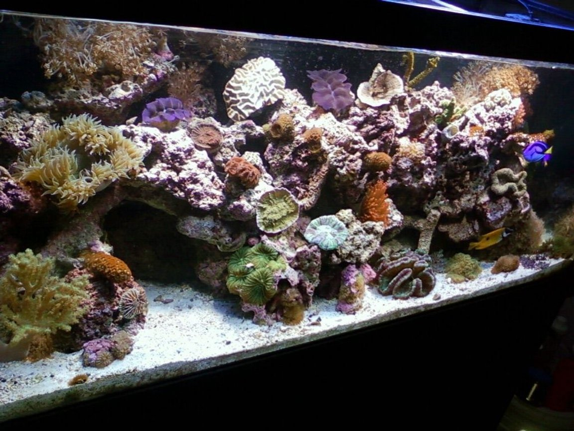 75 gallons reef tank (mostly live coral and fish) - main pic