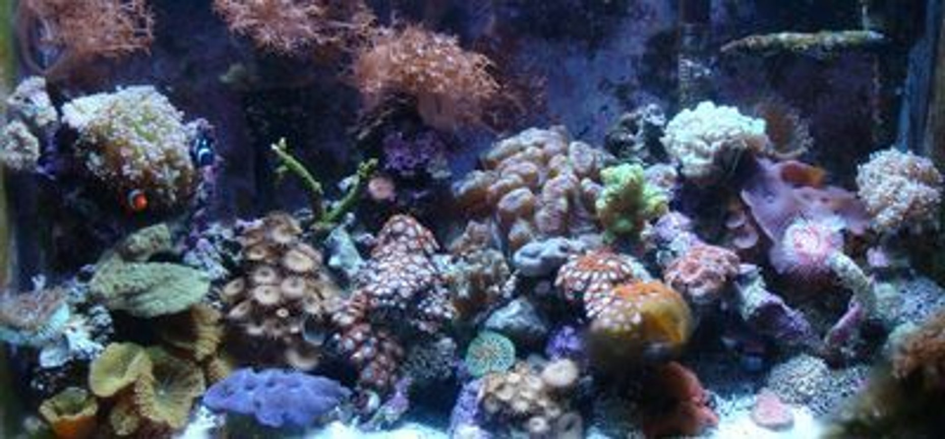 30 gallons reef tank (mostly live coral and fish) - full view of reef tank