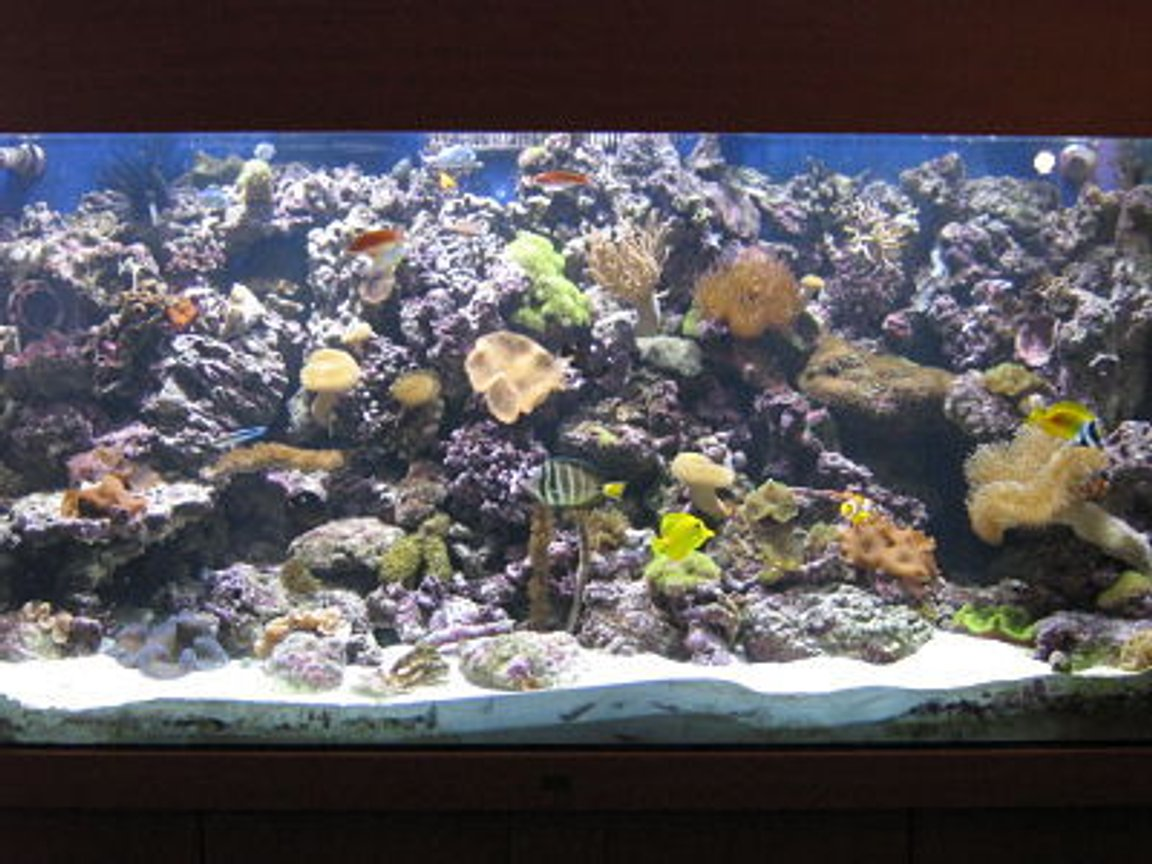 330 gallons reef tank (mostly live coral and fish) - uʍop-ǝpısdn ǝʇıɹʍ uɐɔ ı 'ǝɯosǝʍɐ ɯ,ı FOR SALE! ALL WOOD AND GLASS ONLY! SERIOUS OFFERS CONSIDERED. SOLD
