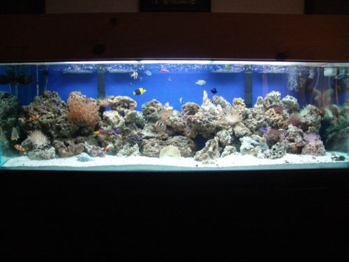 "100 gallons reef tank (mostly live coral and fish) - 100g reef, 120 pound live rock, 100 pound live sand, 2 75g filters, octopus skimmer, 2 20k 48"" floescent, lots of fish!!!"