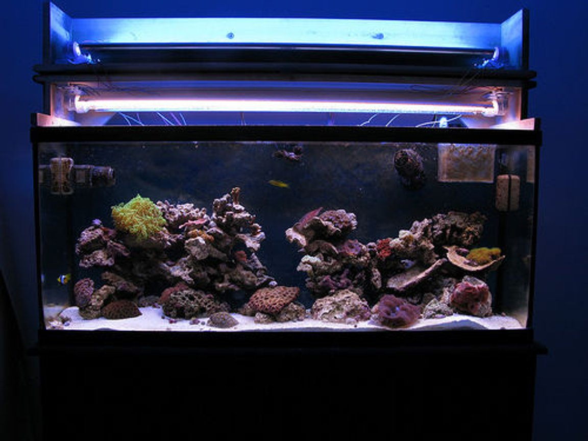 55 gallons reef tank (mostly live coral and fish) - My reef tank