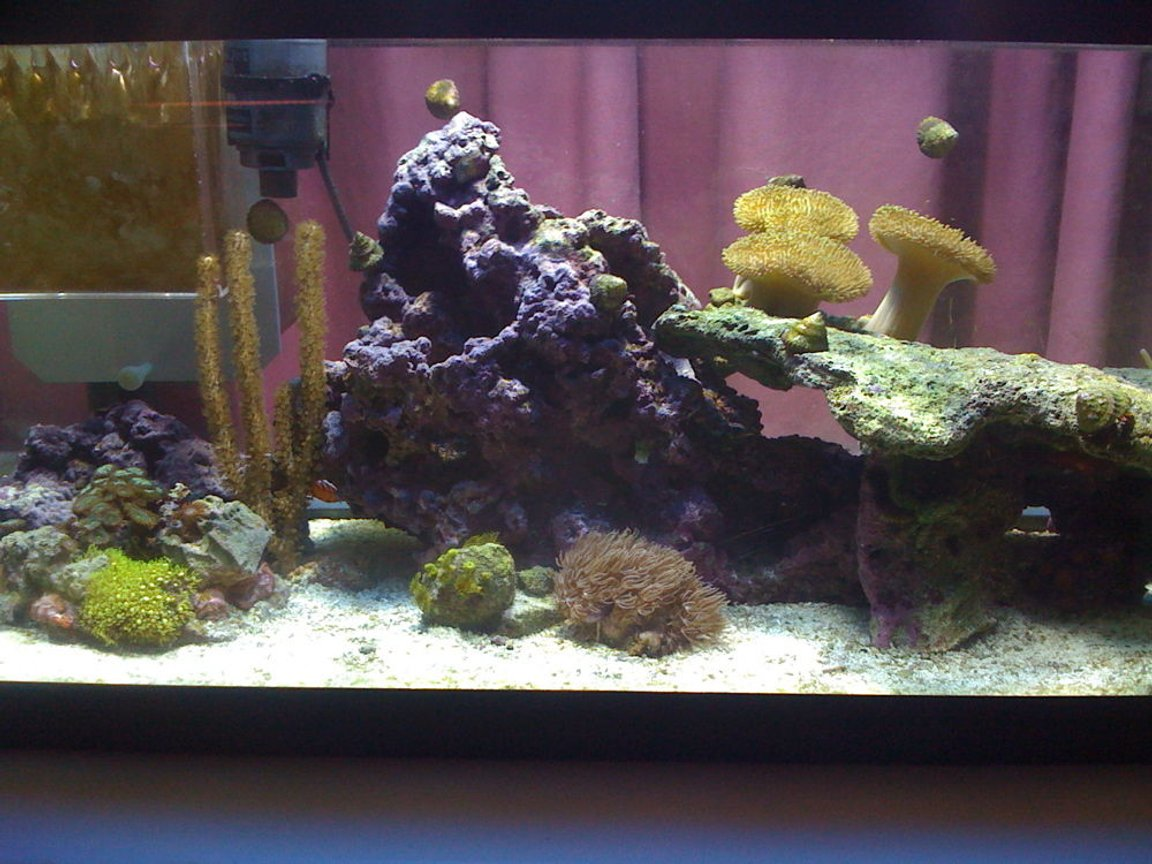 20 gallons reef tank (mostly live coral and fish) - tank