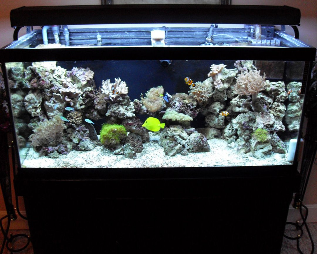 75 gallons reef tank (mostly live coral and fish) - another picture of my newly redesigned aquascape. someone told me my rockwork doesn't look natural, so I rearranged it. please rate.