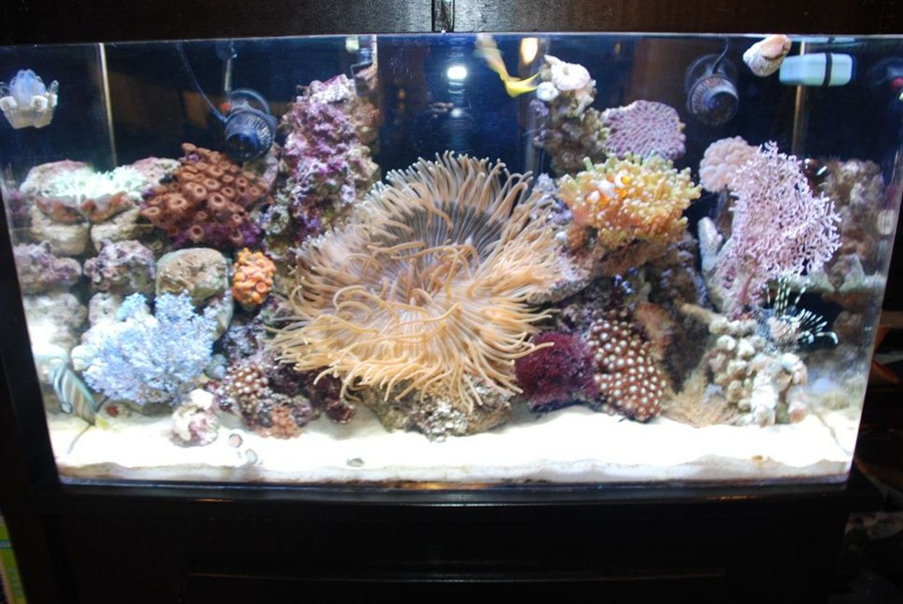 55 gallons reef tank (mostly live coral and fish) - Tank