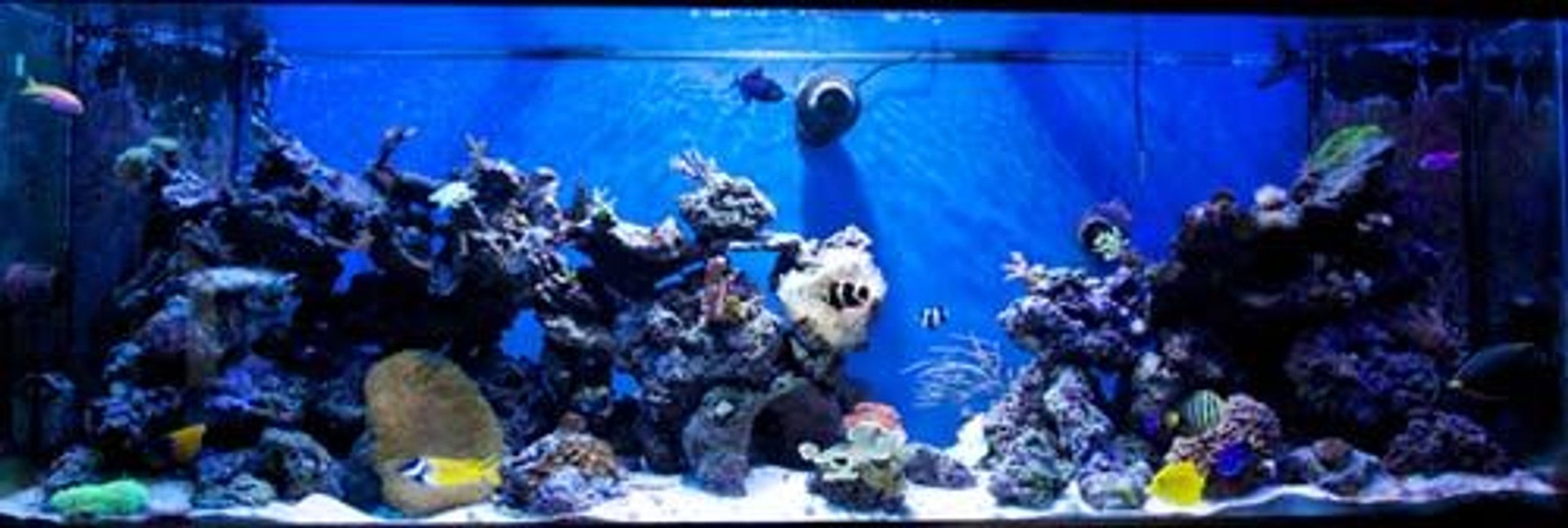 265 gallons reef tank (mostly live coral and fish) - 265g mixed reef