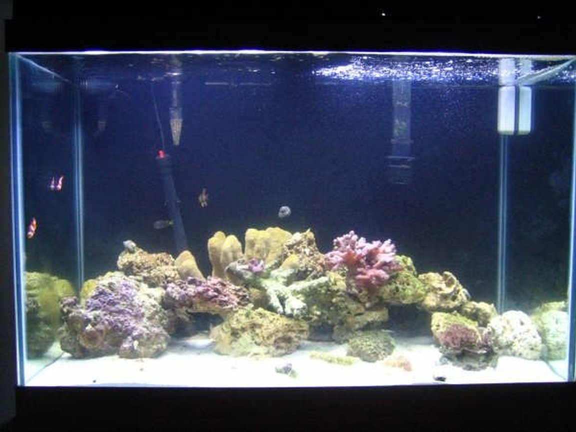 75 gallons reef tank (mostly live coral and fish) - 2 Months Watch Me Develop
