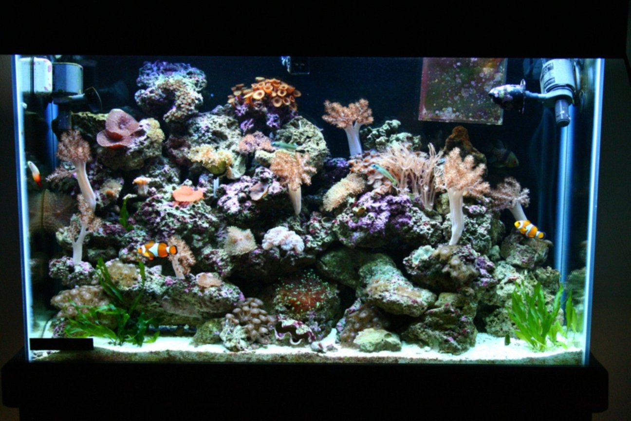 45 gallons reef tank (mostly live coral and fish) - 1 year old 45 gallon tank.