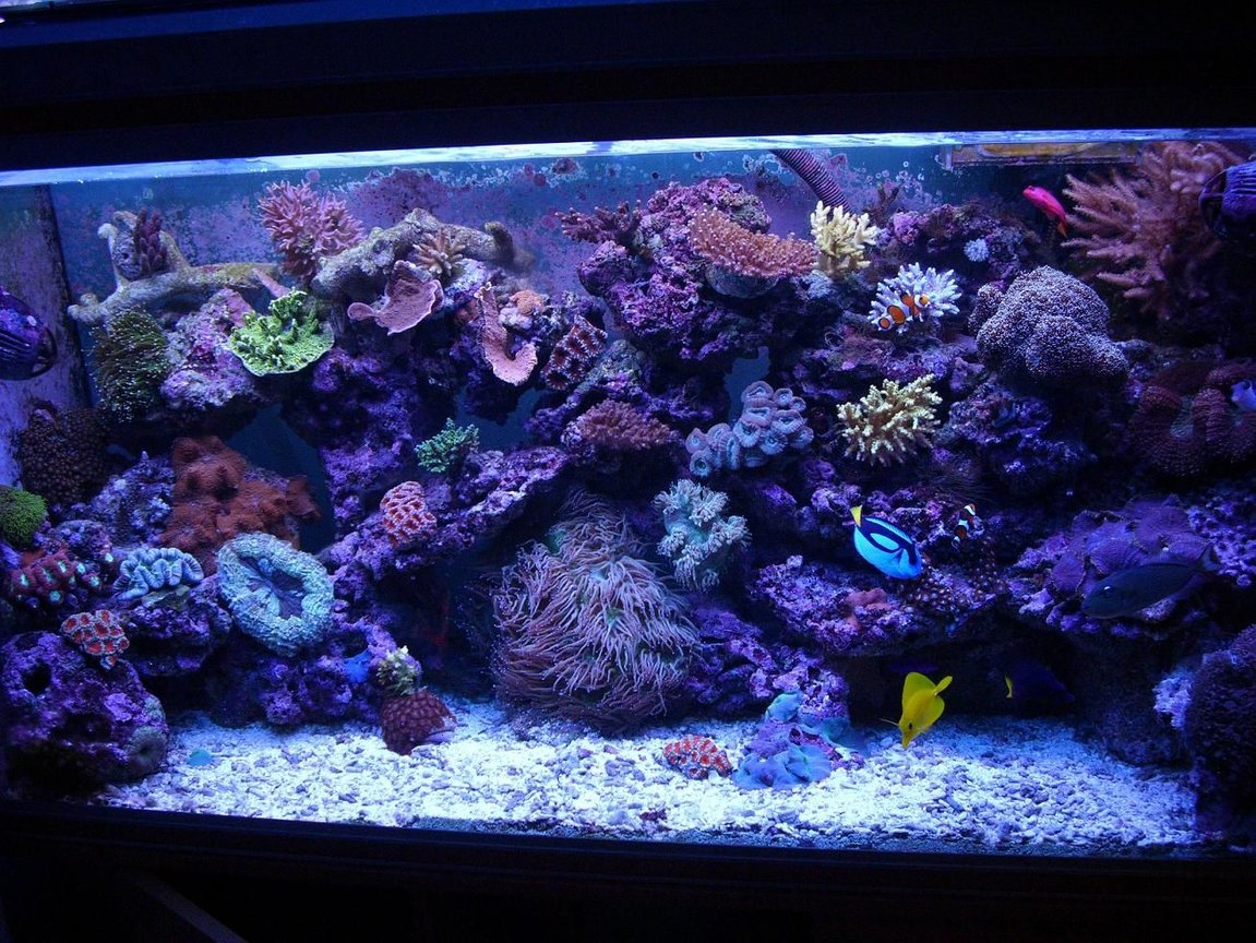 100 gallons reef tank (mostly live coral and fish) - a few month ago :D