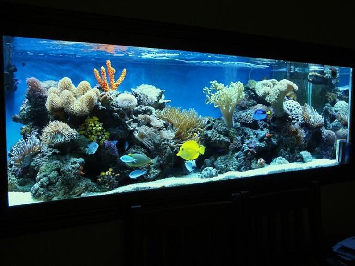 185 gallons reef tank (mostly live coral and fish) - check this puppy out