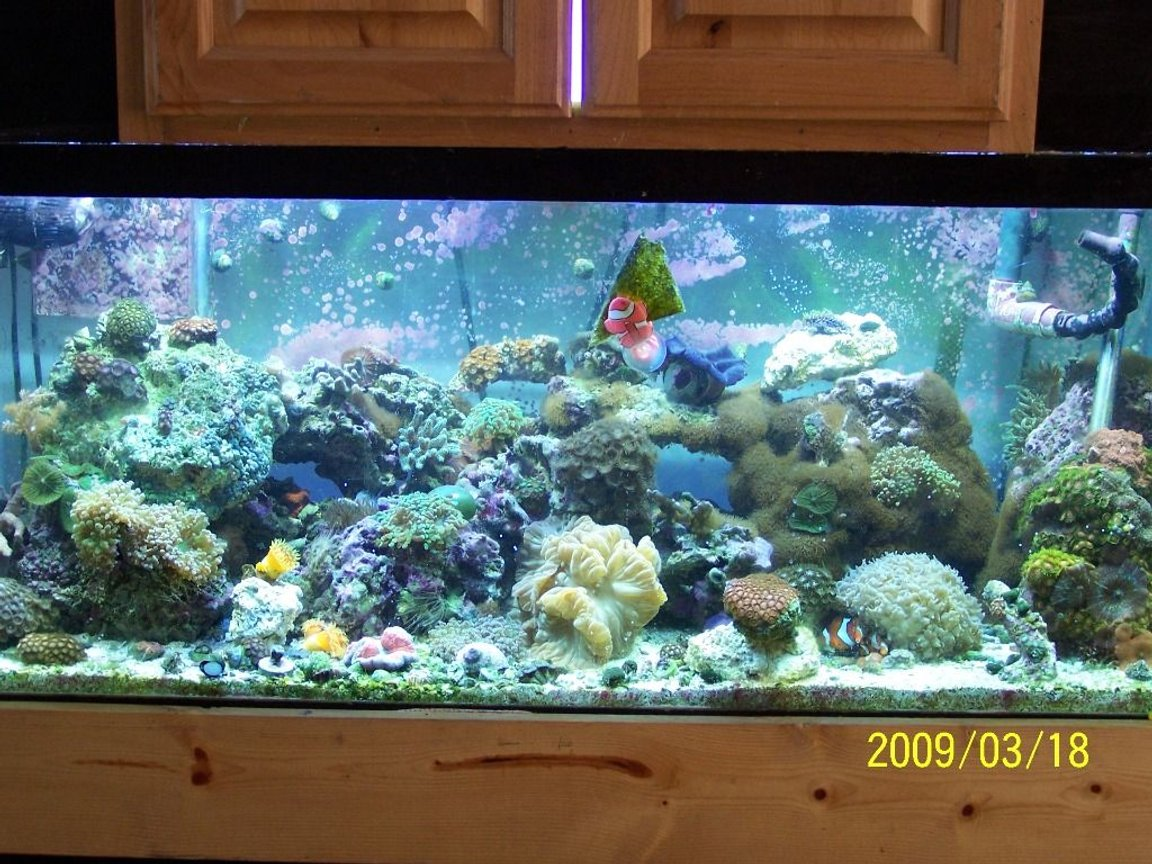75 gallons reef tank (mostly live coral and fish) - My 75 gal Reef
