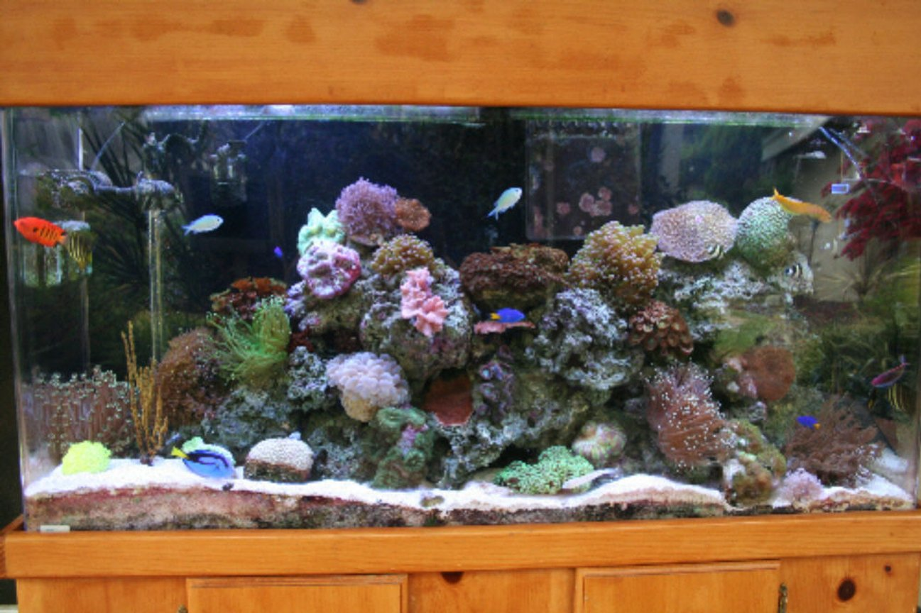 90 gallons reef tank (mostly live coral and fish) - This is my 90 gallon reef tank.Running for about a year and a half.