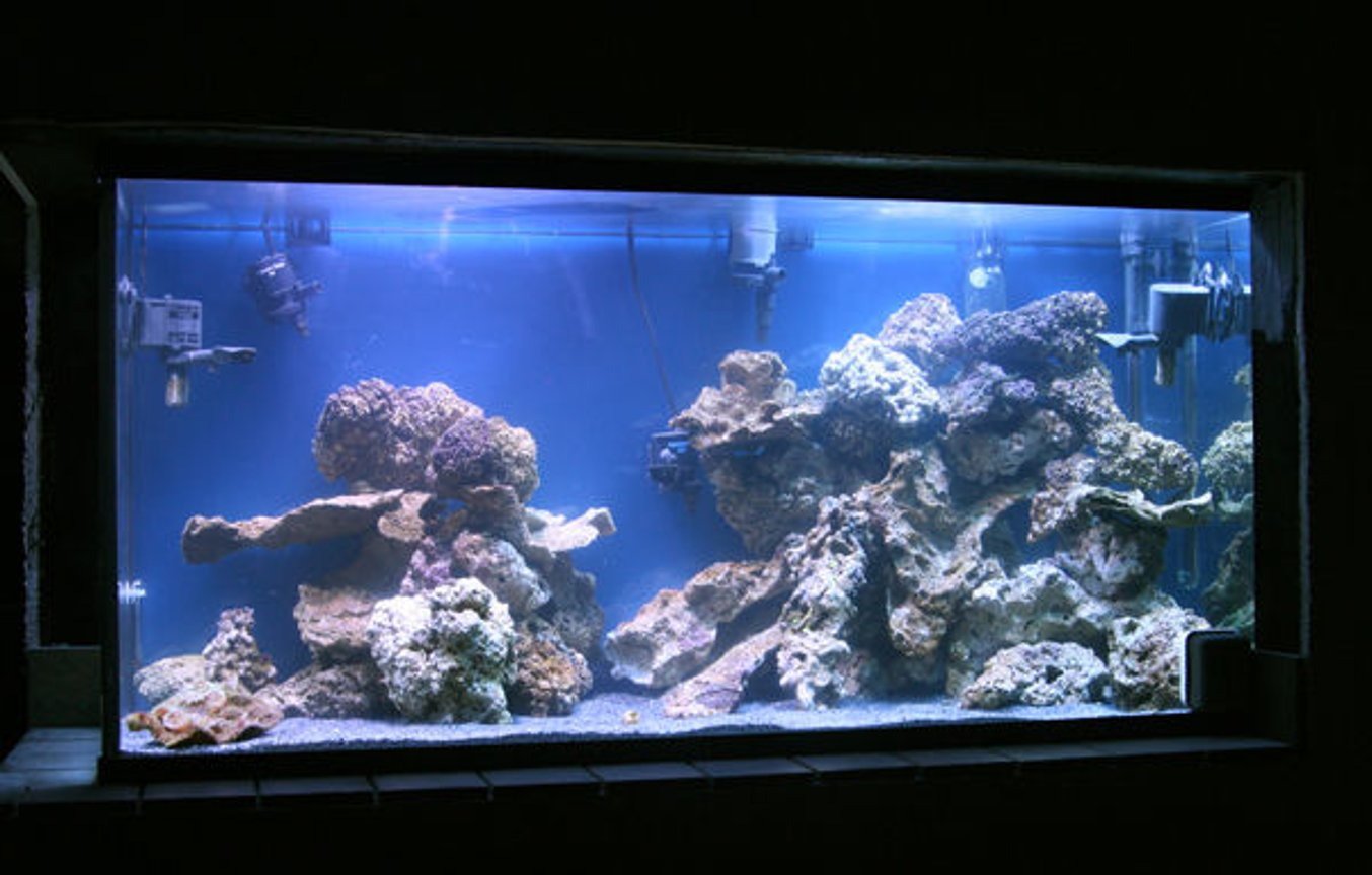 90 gallons reef tank (mostly live coral and fish)