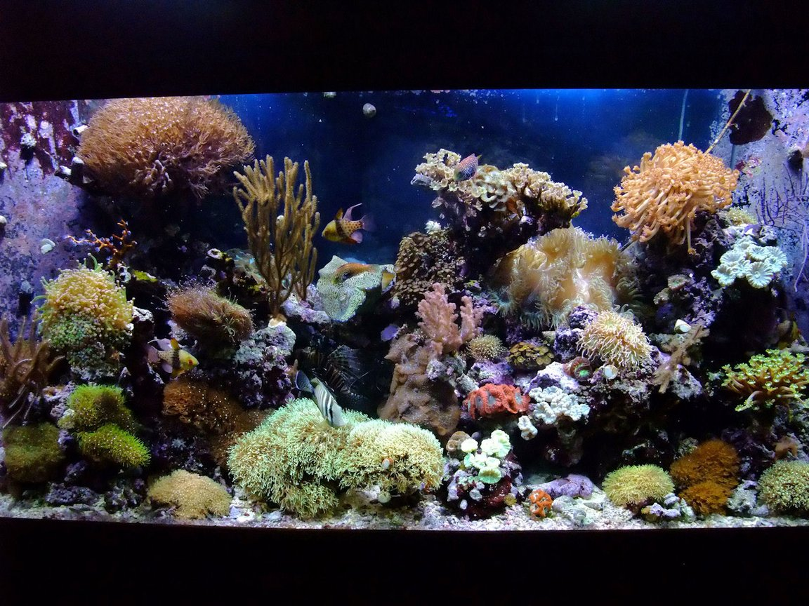 130 gallons reef tank (mostly live coral and fish) - 130 Gal Mixed Reef,close to 4 years old.