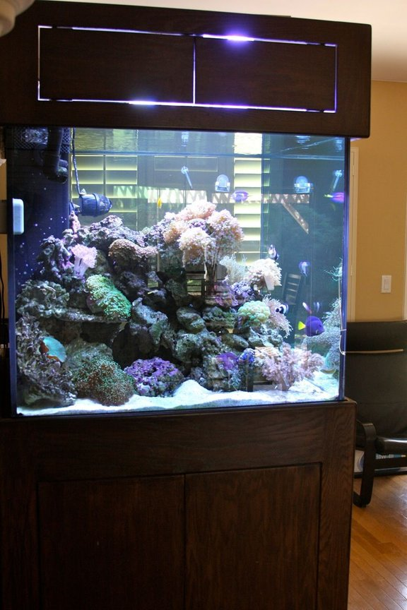 210 gallons reef tank (mostly live coral and fish) - Side View