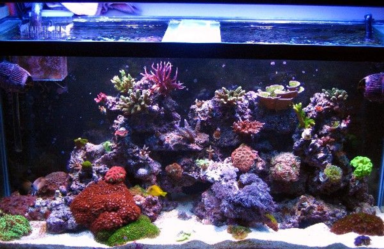 90 gallons reef tank (mostly live coral and fish) - 90g.1yr.old..mixed reef...outer orbit hqi/t5. 2x250w mh with 4x54w actinics pheonix 14k DE bulbs...aqua c ev 120 protein skimmer, pro clear wet.dry filter. 2xkaralia#4. quite one 2200 return pump..pro clear overflow box. 110 lbs. live rock..80 lbs of sand.
