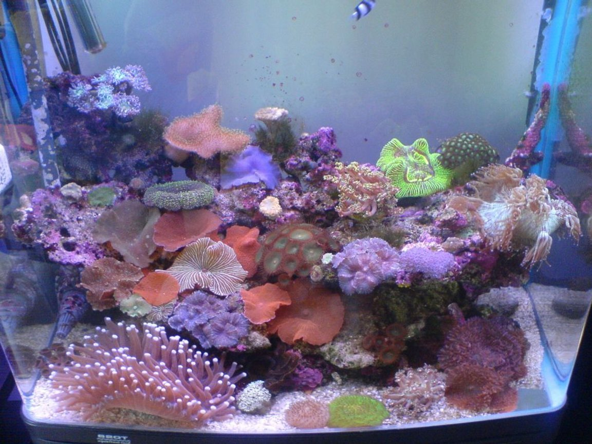 reef tank (mostly live coral and fish) - My small tank full of goodies :) Its not a big tank, 2ft high, 2ft long, 1.5ft wide.