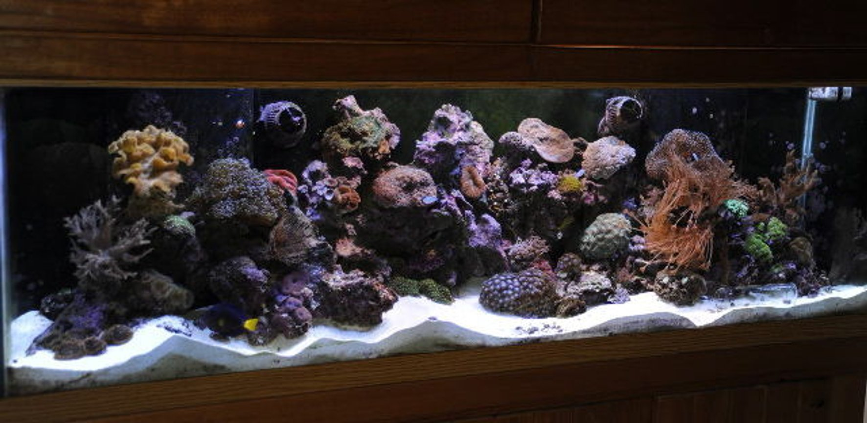 125 gallons reef tank (mostly live coral and fish) - 125g