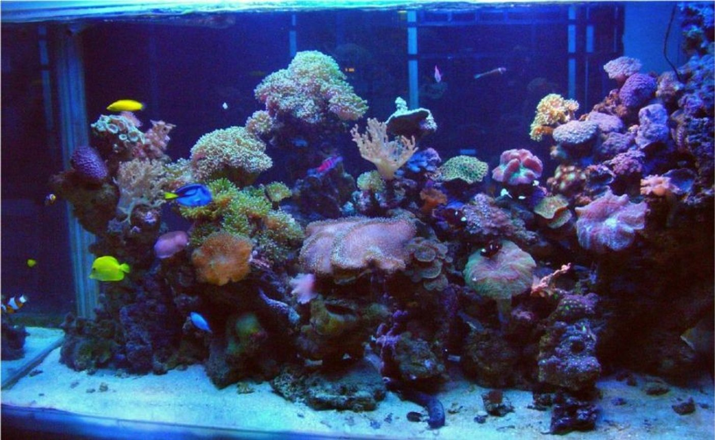 250 gallons reef tank (mostly live coral and fish) - Marine reef Display