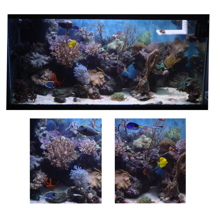 120 gallons reef tank (mostly live coral and fish) - 120 Gallon reef tank - lighting, 2-150 watt MH schuran skimmer, 40g sump , 4 power heads , calcium reactor , live rock
