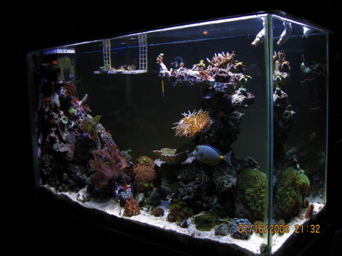 90 gallons reef tank (mostly live coral and fish) - Side view