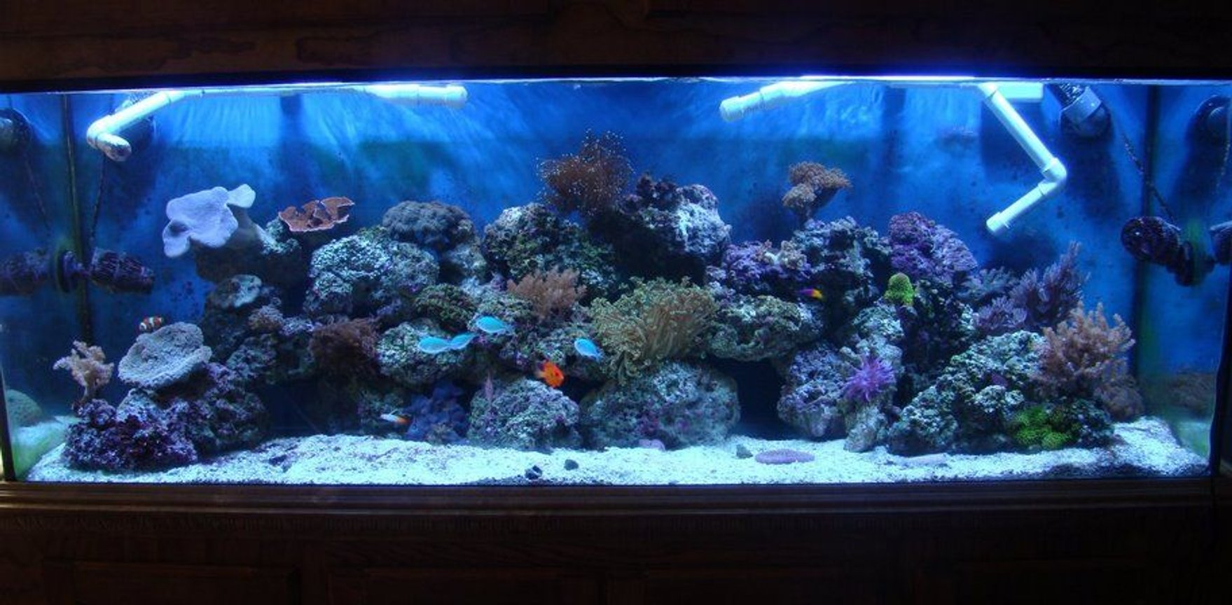 130 gallons reef tank (mostly live coral and fish) - davids 130 gallon reef