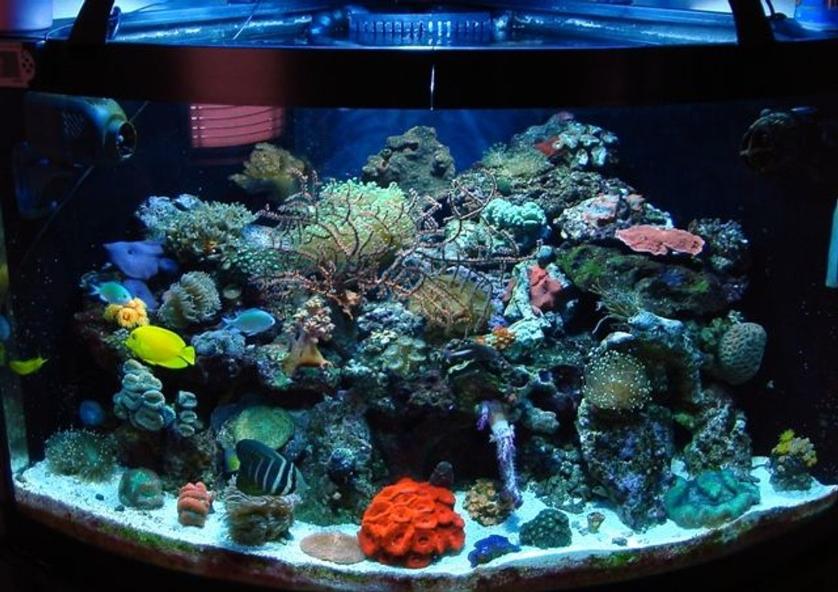 54 gallons reef tank (mostly live coral and fish) - 54 gal bowfront glass aquarium w/built in overflow