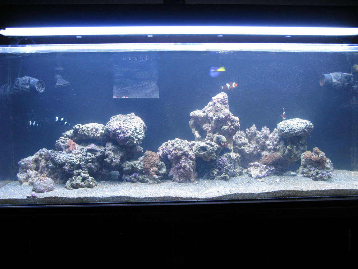 60 gallons reef tank (mostly live coral and fish) - 60GAL