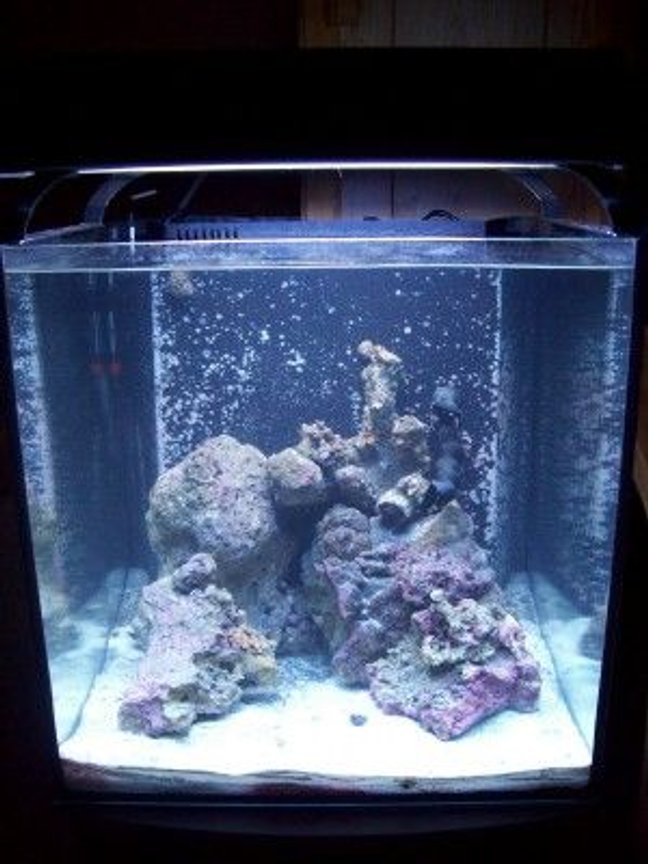 55 gallons reef tank (mostly live coral and fish) - 34 gal Solana freshly started. Few Zoo's more to come soon.