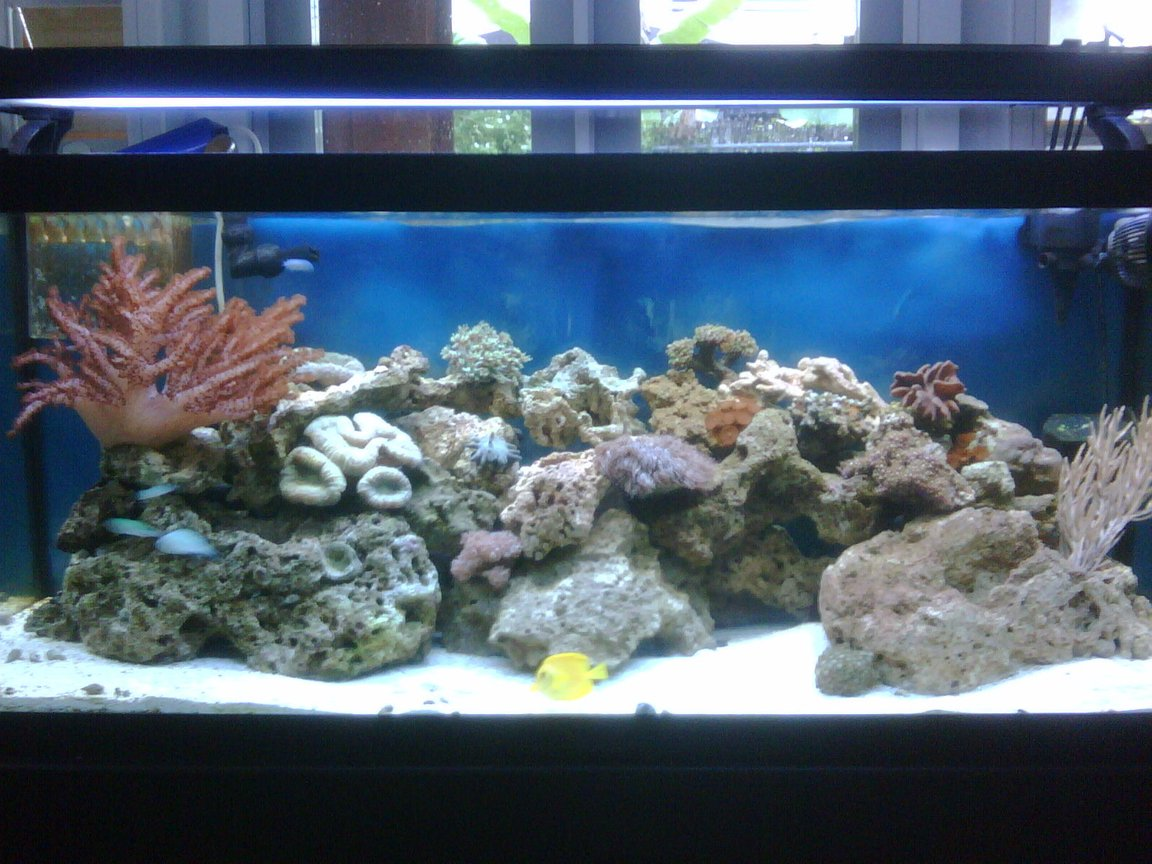 75 gallons reef tank (mostly live coral and fish) - 75g Tank