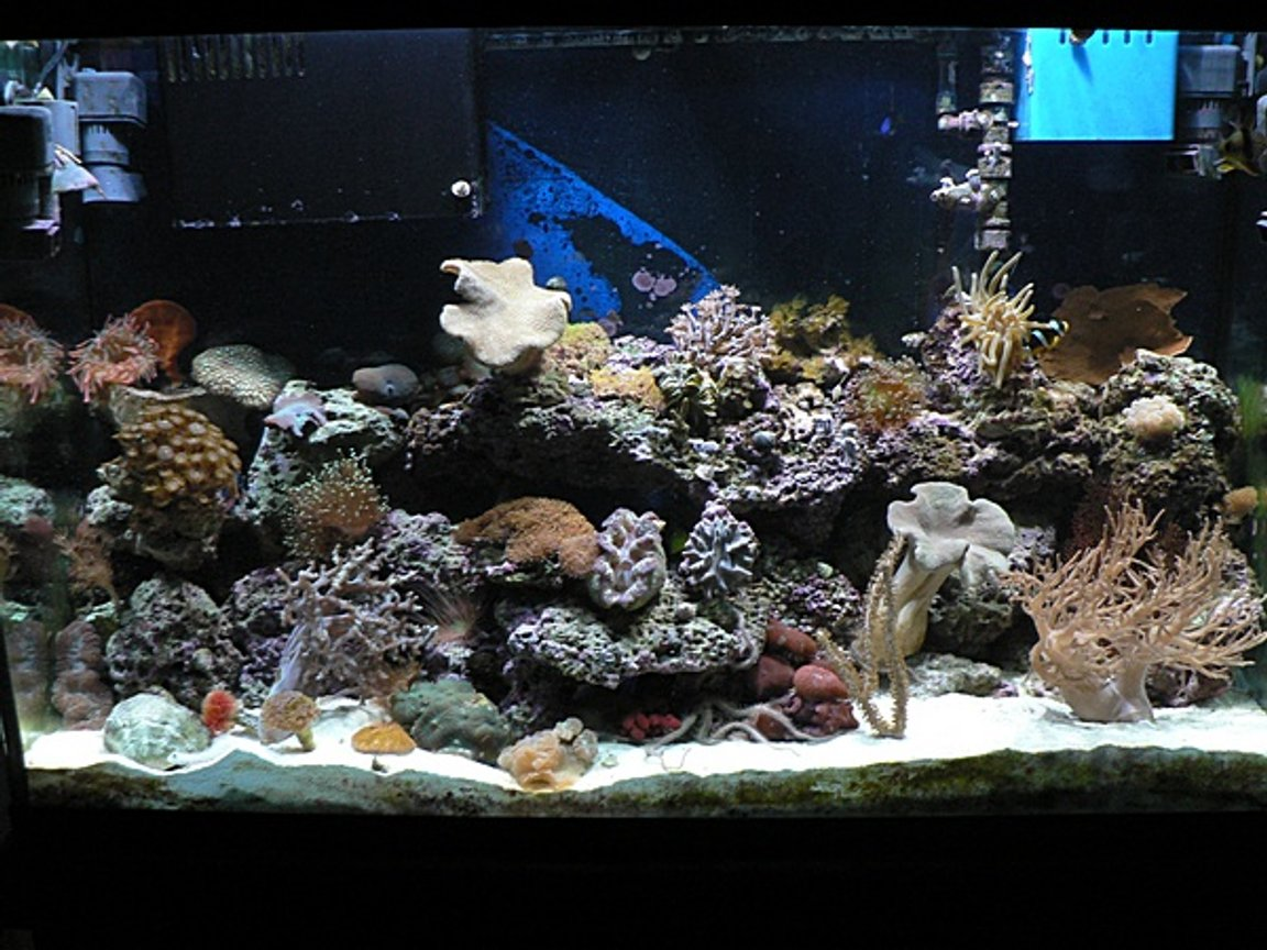110 gallons reef tank (mostly live coral and fish) - reef tank