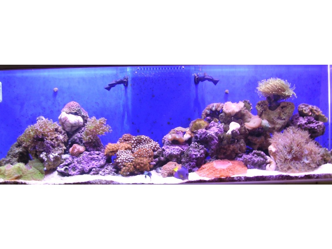 100 gallons reef tank (mostly live coral and fish) - updated pick of my 100 gal tank now 6 mo old