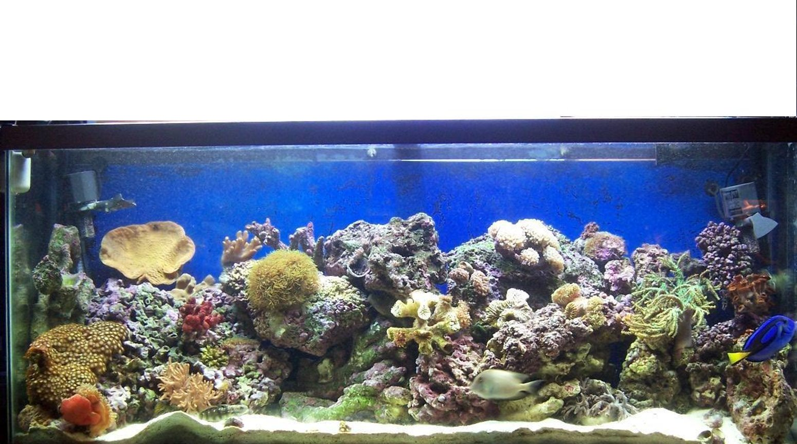 55 gallons reef tank (mostly live coral and fish) - Redone 55 gallon reef