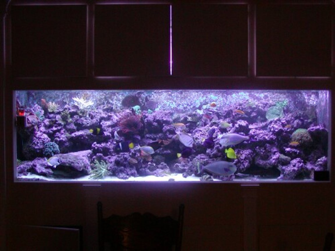 542 gallons reef tank (mostly live coral and fish) - *Our 540 gallon Reef* This photo was taken right after Hurricane Katrina. A couple fish and corals have died since.