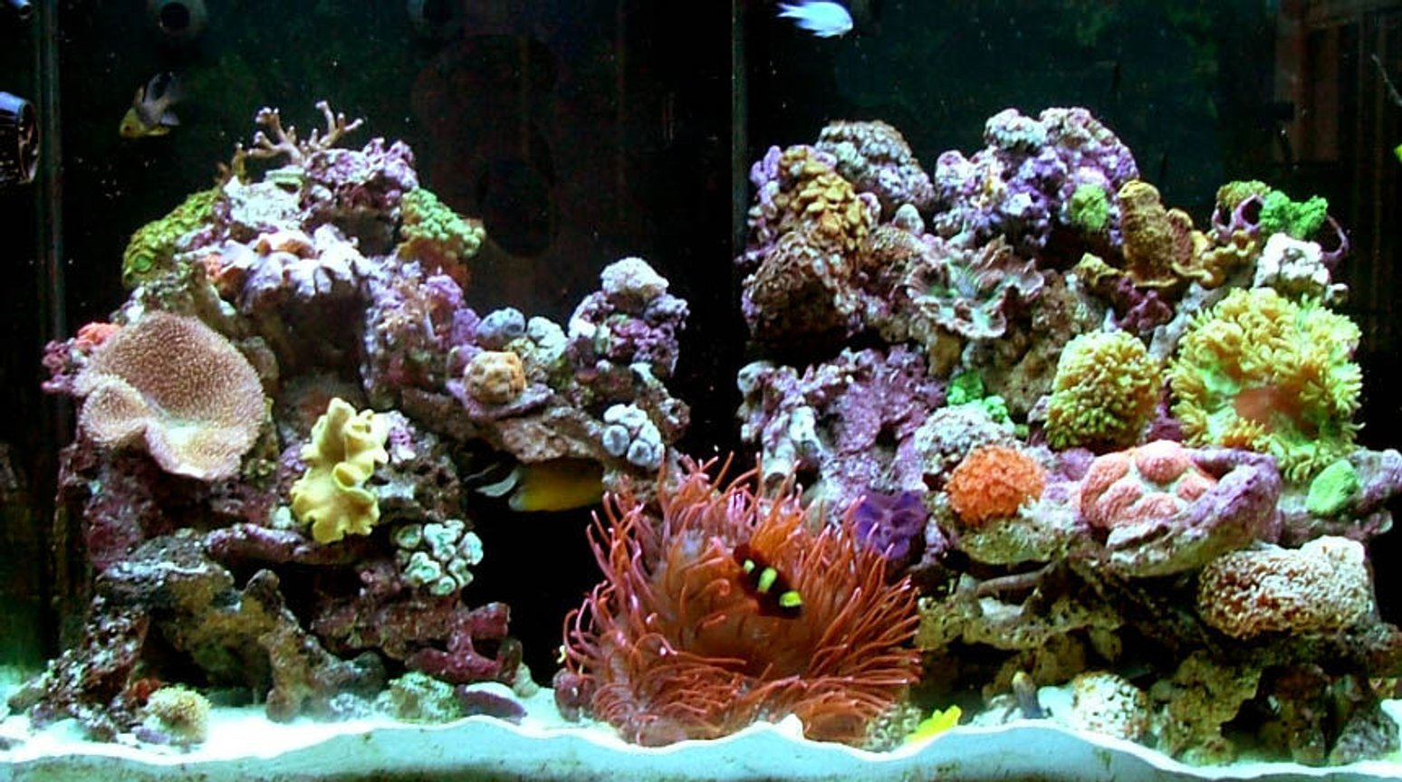 120 gallons reef tank (mostly live coral and fish) - new tank set up