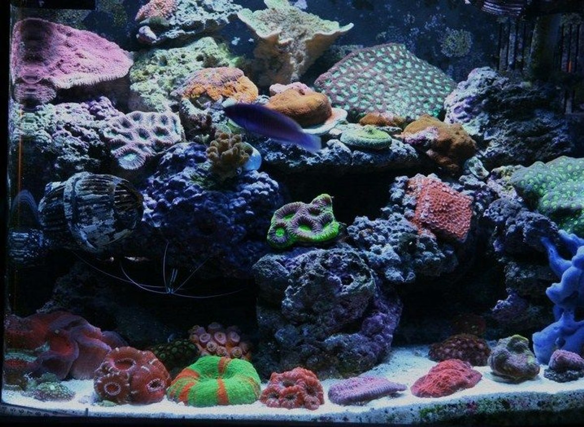 25 gallons reef tank (mostly live coral and fish) - nano