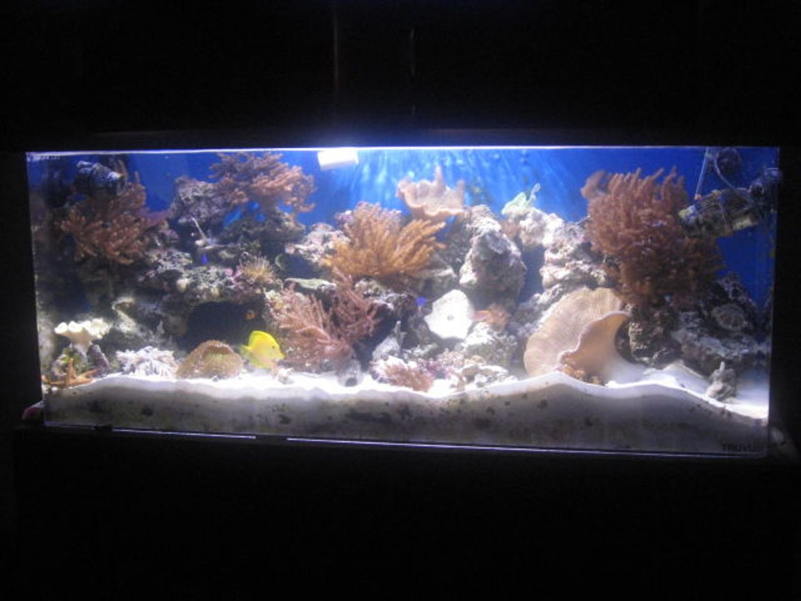 90 gallons reef tank (mostly live coral and fish) - my tank a year later