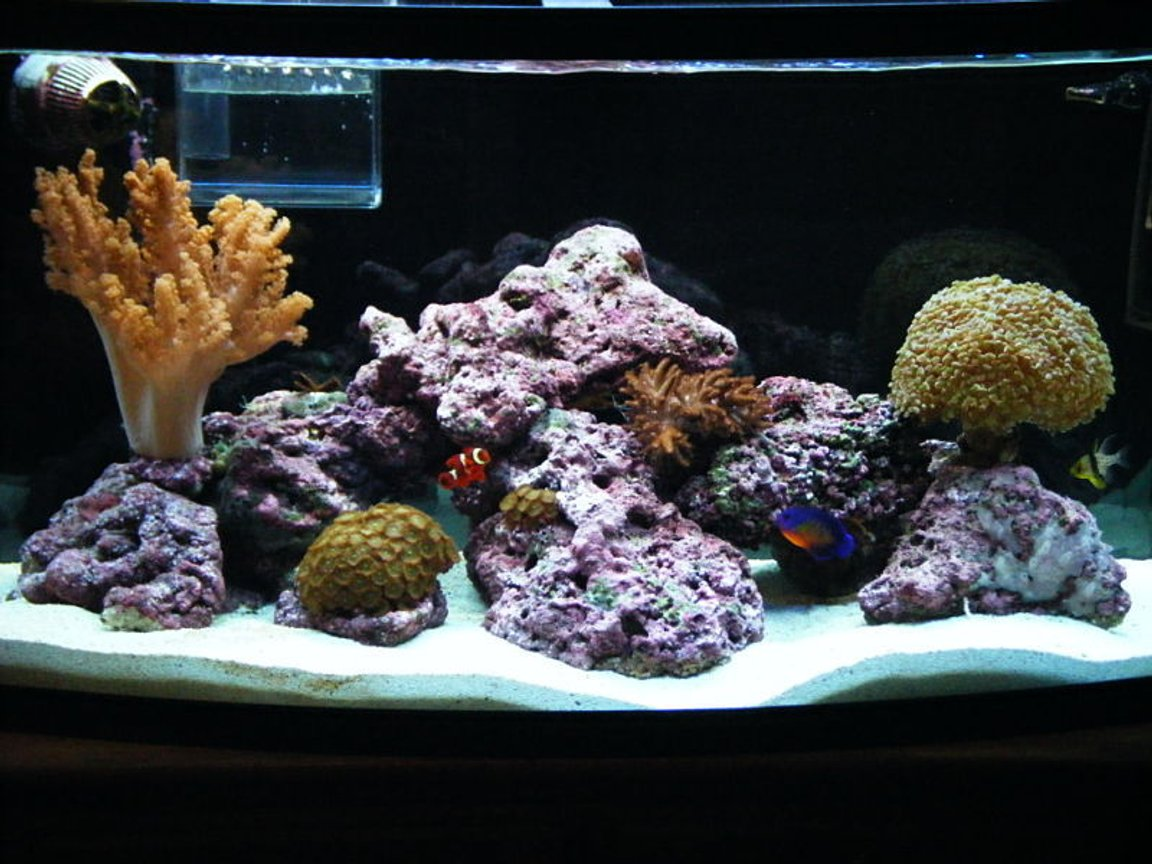 46 gallons reef tank (mostly live coral and fish) - 1yr old 46 BOWFRONT Reef Tank in progress.