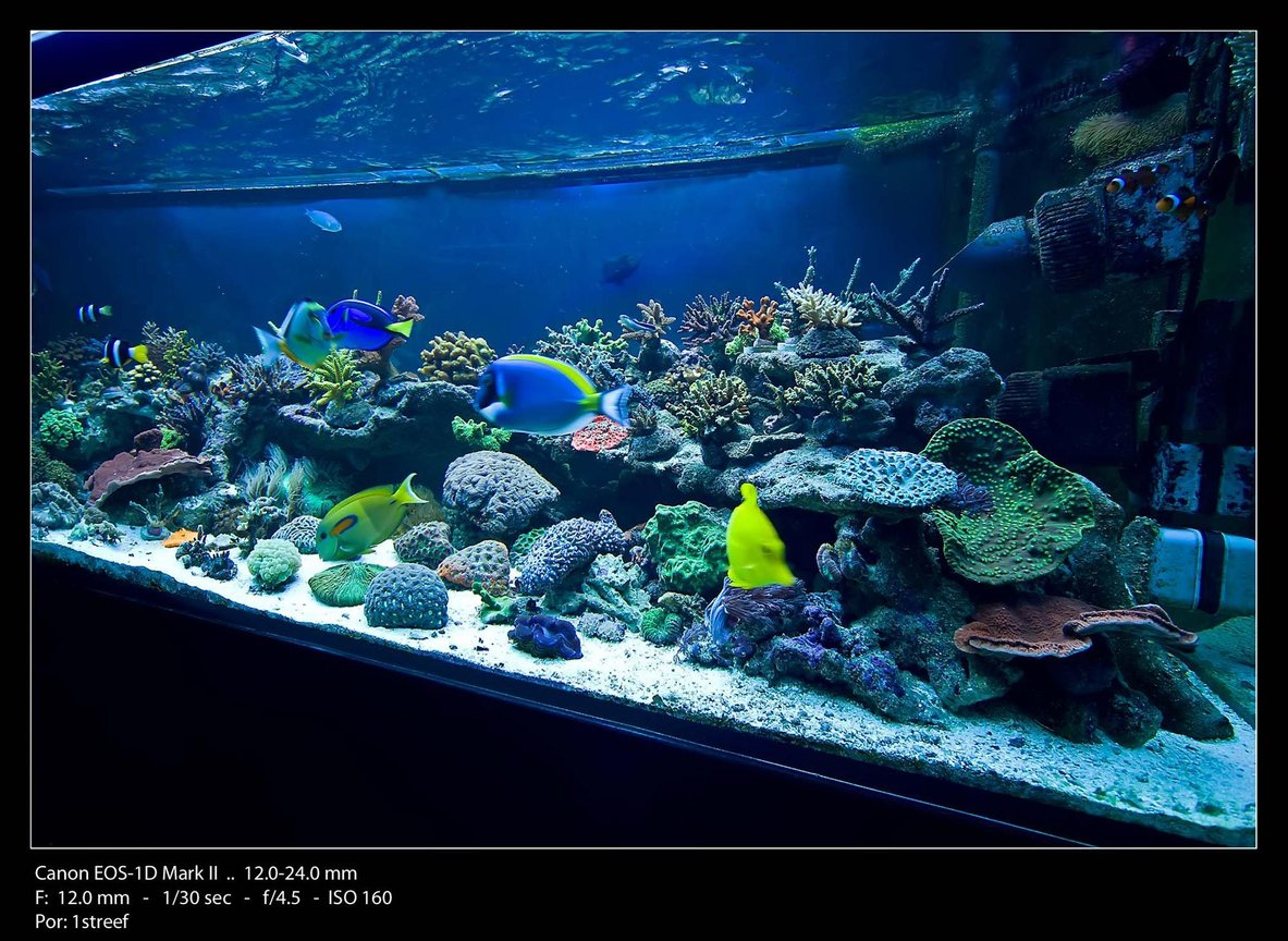 175 gallons reef tank (mostly live coral and fish) - Angle view shot