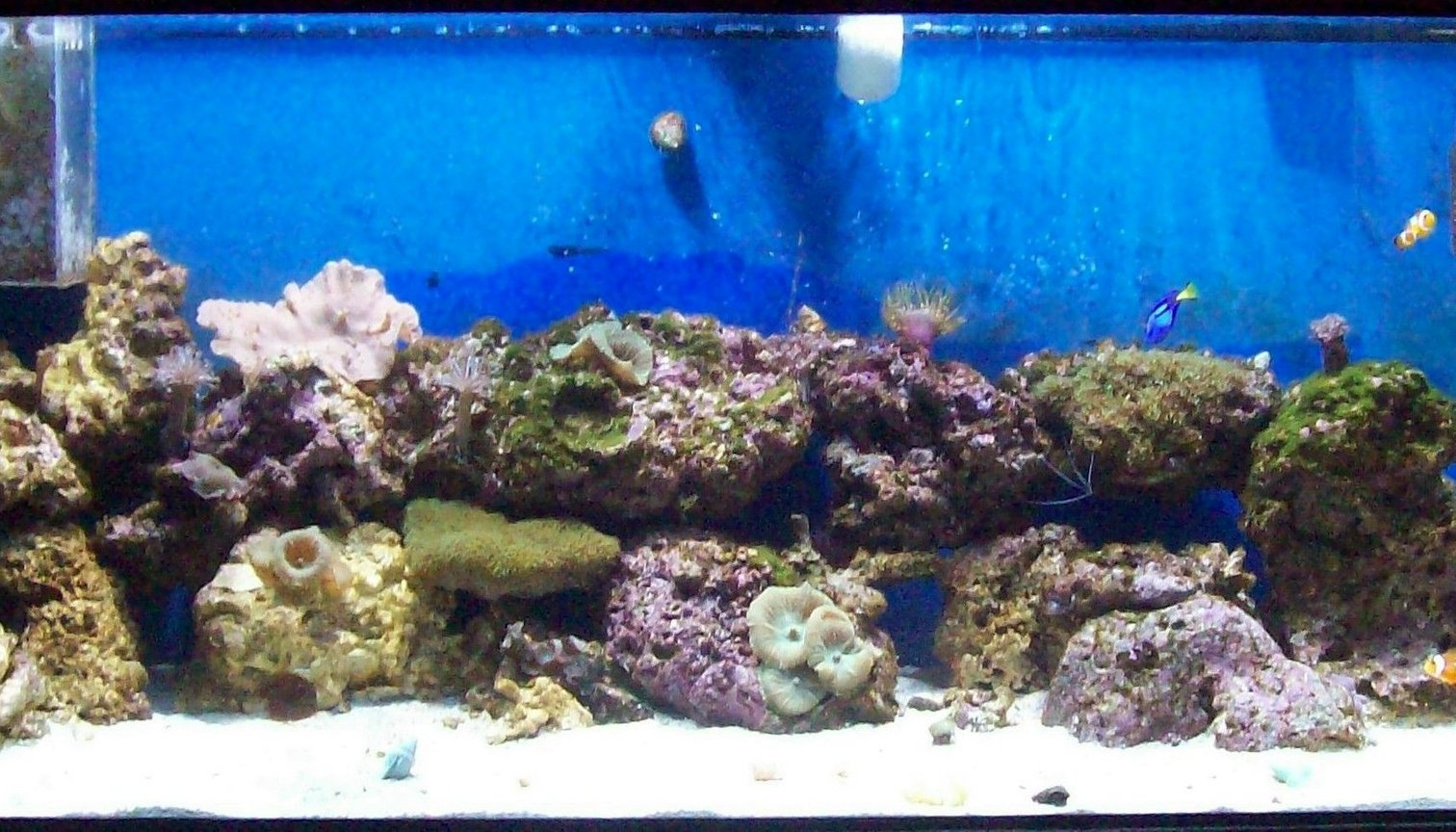 75 gallons reef tank (mostly live coral and fish) - my first try at a reef.