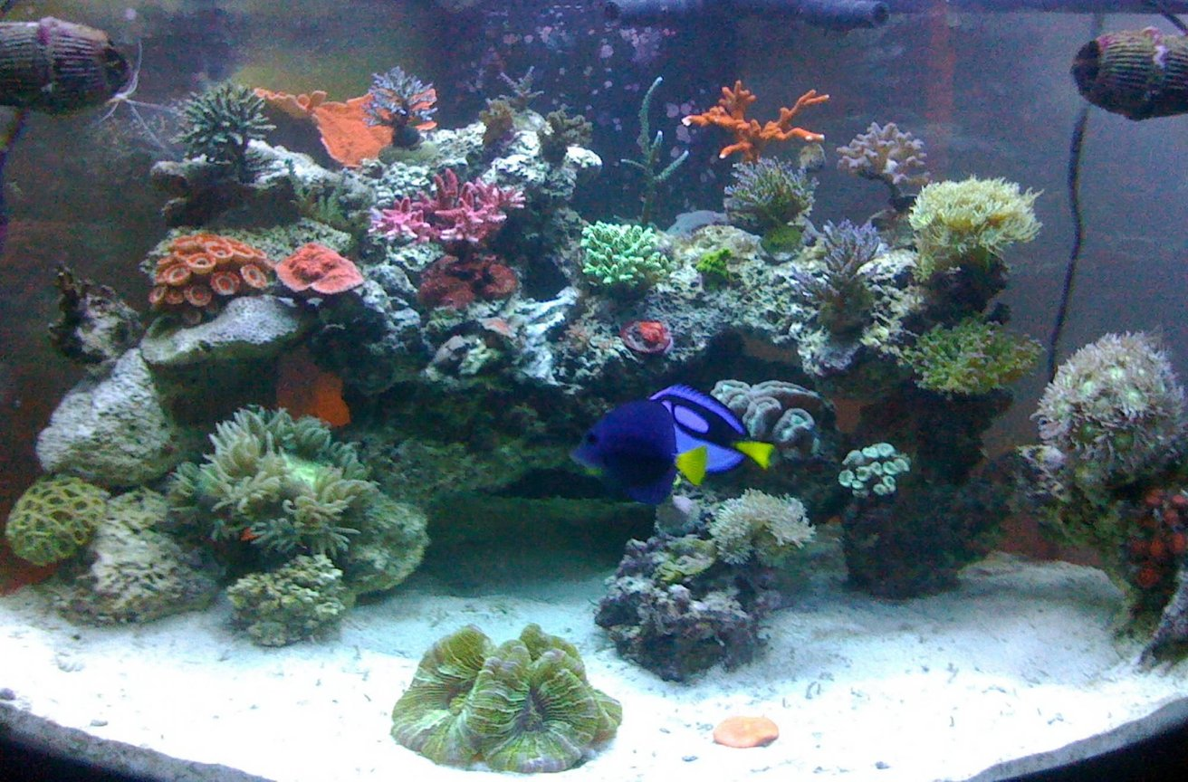 92 gallons reef tank (mostly live coral and fish) - Full View of tank