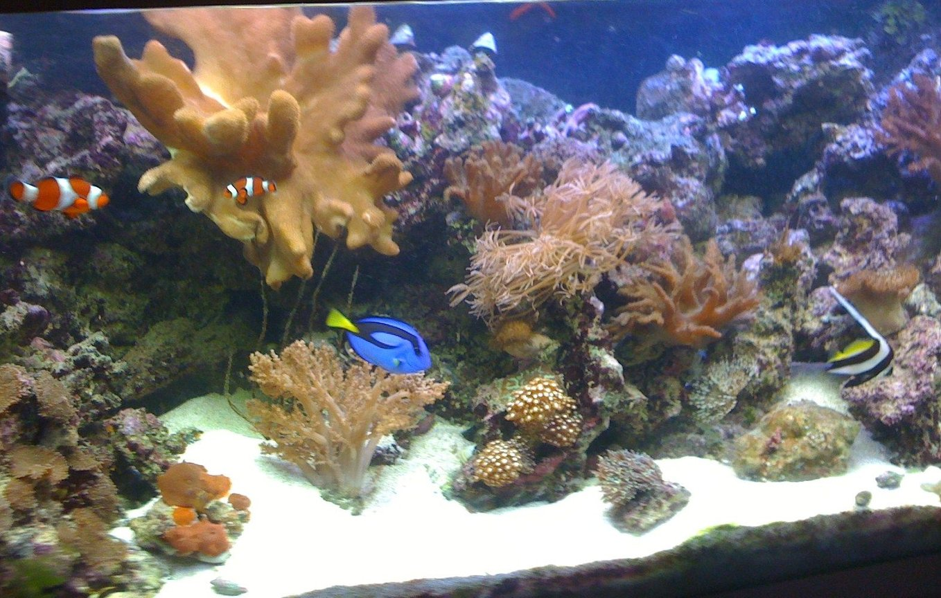 400 gallons reef tank (mostly live coral and fish) - my 4ft reef so far.