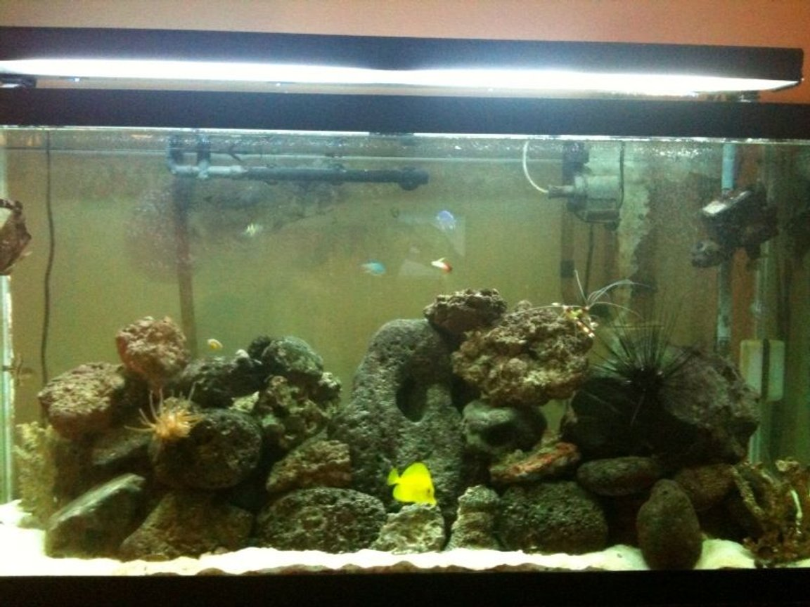 90 gallons reef tank (mostly live coral and fish) - 1 yr and Counting