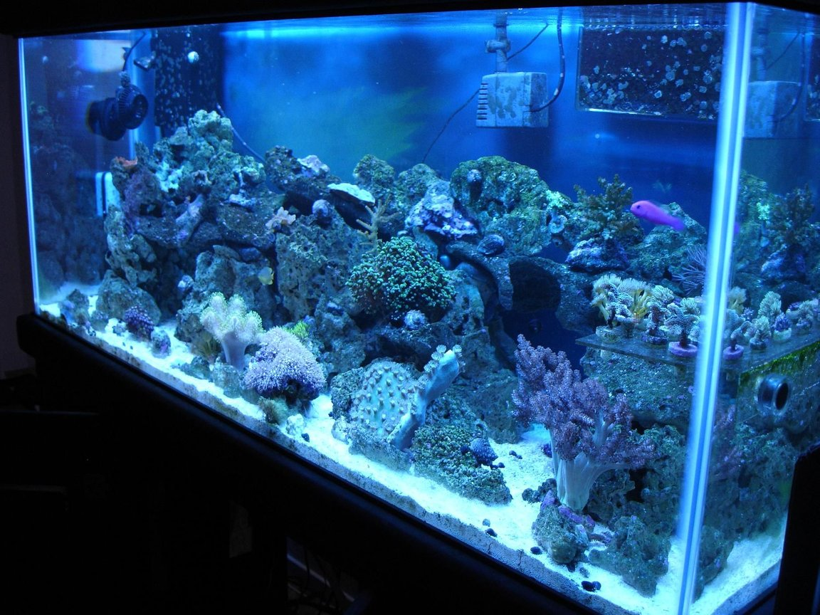 75 gallons reef tank (mostly live coral and fish) - 75gallon reef, 4 months old