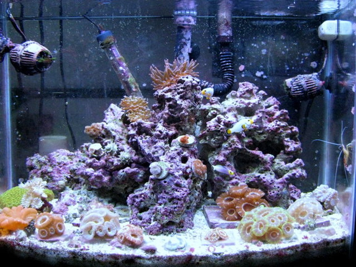 28 gallons reef tank (mostly live coral and fish) - 28g bow front, 18 acans, 4 micromusa's,pink bubble tip anemone,wrath of grapes favid,cleaner shrimp,helfrichi firefish,pair of maine blizzard perculas,3 peppermint shrimp