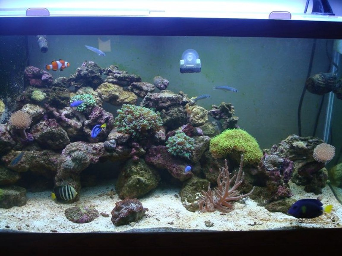 90 gallons reef tank (mostly live coral and fish) - All Glass fish/reef tank. Aquatic Life 6bulb t-5. Protein skimmer. Refugium.