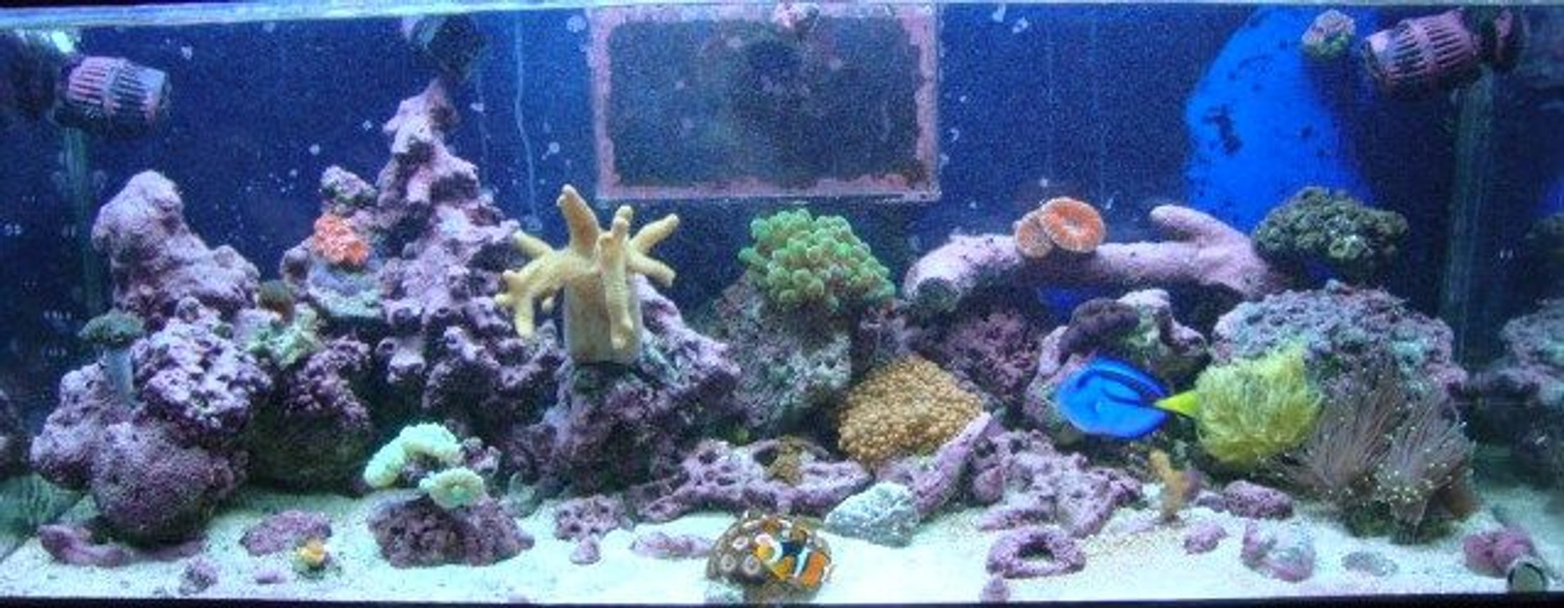 30 gallons reef tank (mostly live coral and fish) - My reef tank