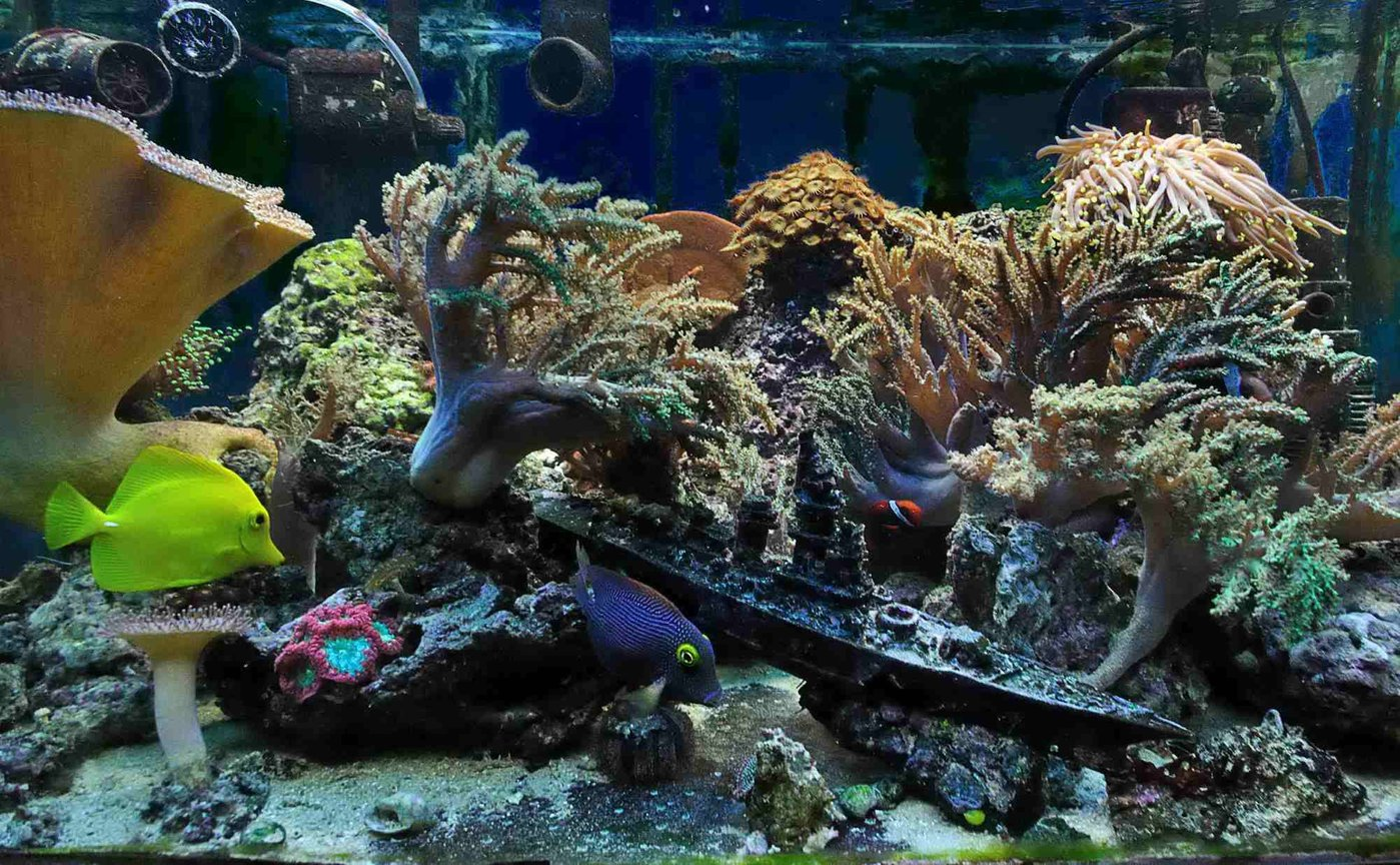 50 gallons reef tank (mostly live coral and fish) - 50 gallon reef (5 years experience, last 4 in place)