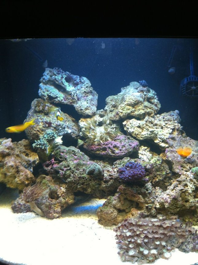 28 gallons reef tank (mostly live coral and fish) - These were all taken with an iphone 4 which I think is pretty good quality. I am looking for suggestions!!!