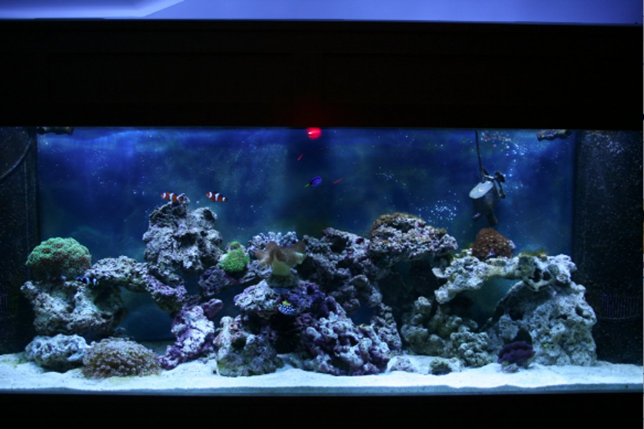 150 gallons reef tank (mostly live coral and fish) - not done yet