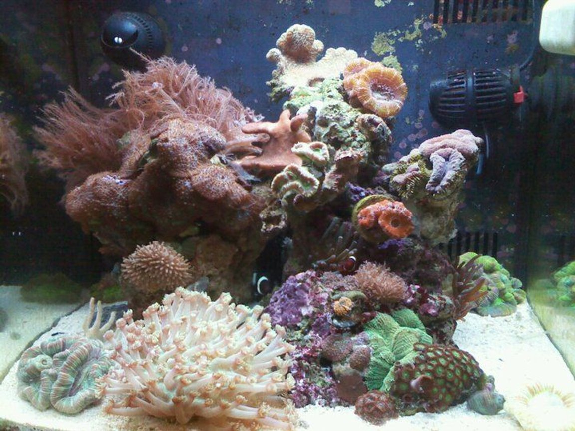 14 gallons reef tank (mostly live coral and fish) - 14 gallon bio cube tank